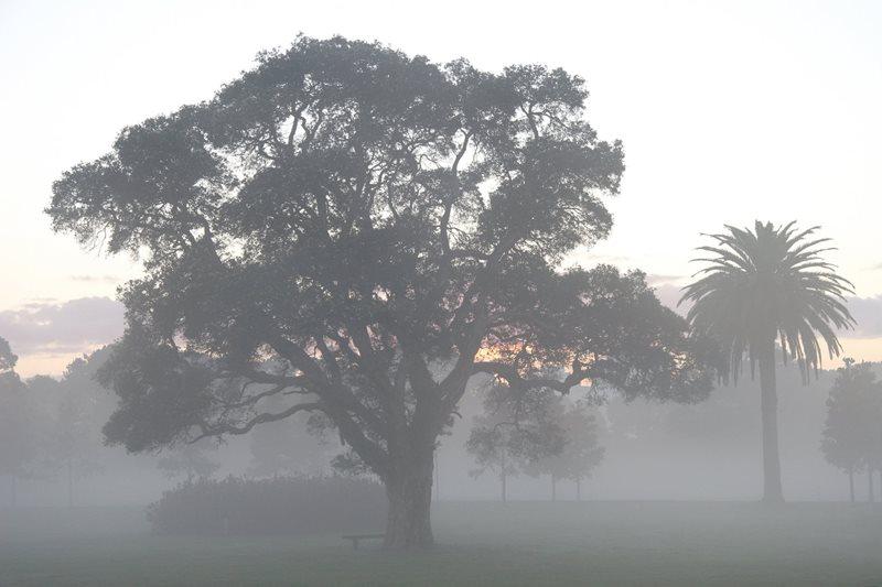 rain in centennial park