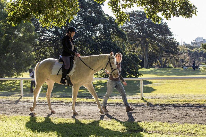 equestrian, sydney horse, centennial park, park ride