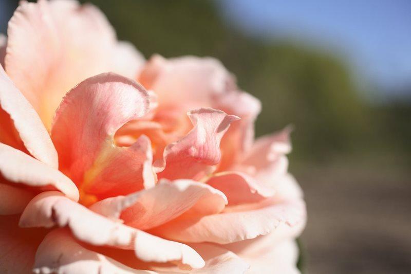 rose garden centennial park