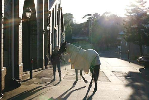 The Centennial Parklands Equestrian Centre Is Located Just