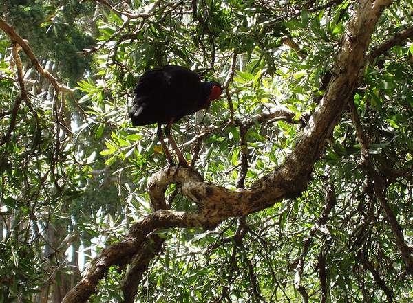 Bird In Tree - by Paul Atroshenko