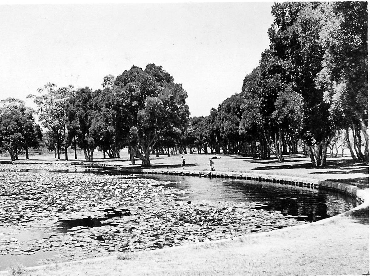 5 Things You Didn T Know About Centennial Park S Ponds