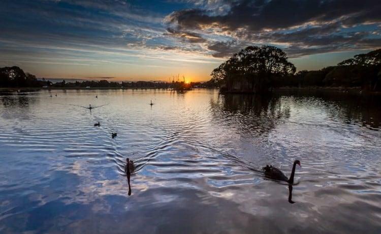 duck pond centennial park