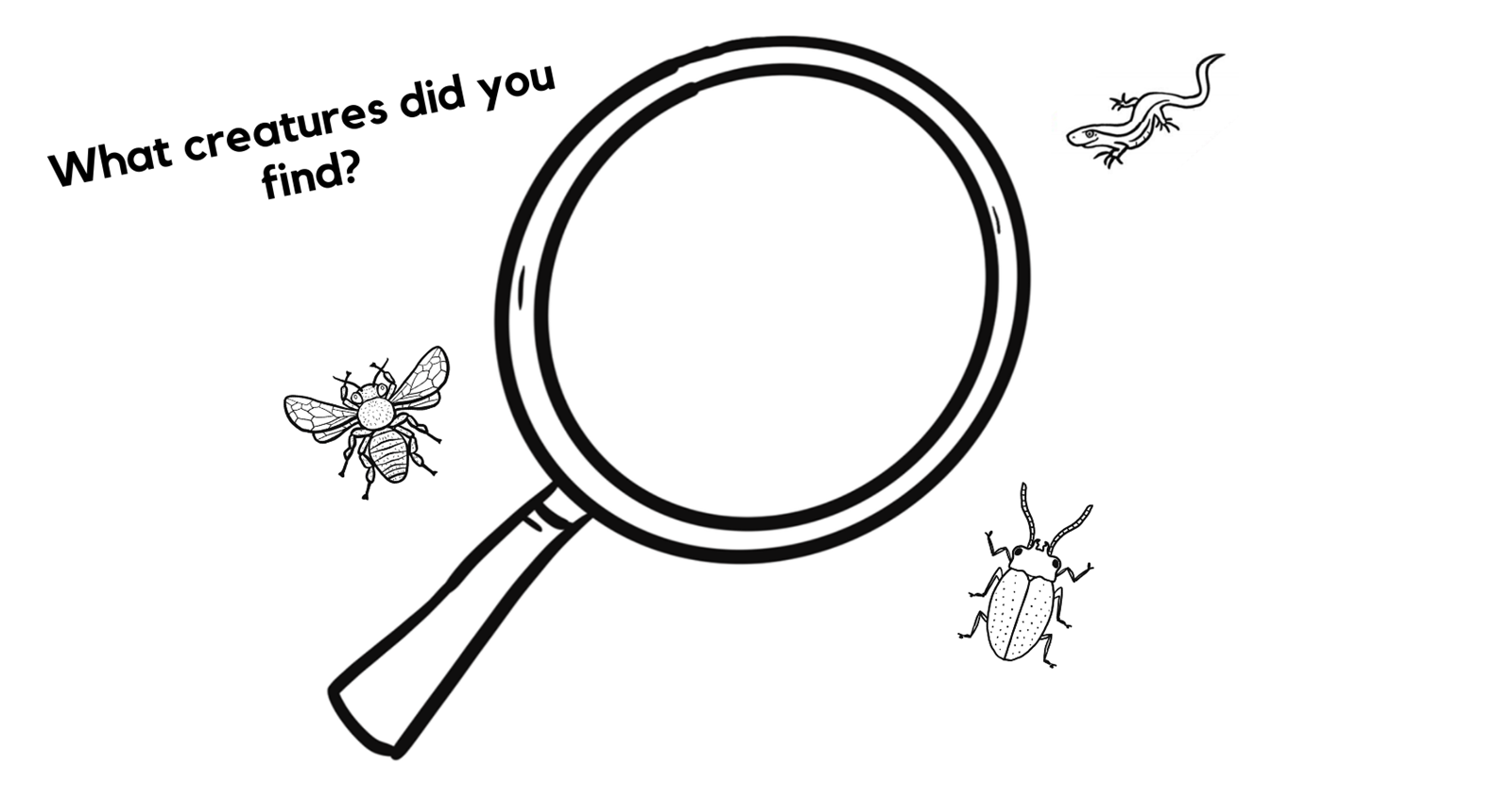Magnifying glass with bugs around it and text: what creatures did you find?