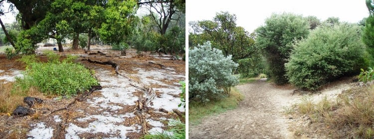ESBS remnants in Centennial Parklands (Bird Sanctuary on right; York Road on left)