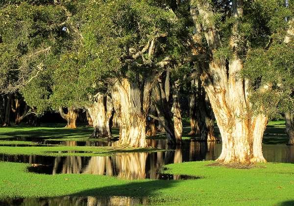 Swamp Trees - by Paul Atroshenko