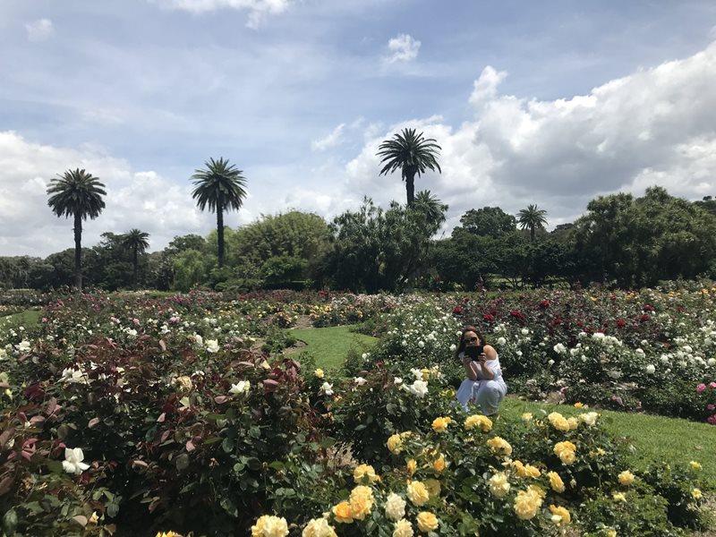 rose garden centennial parklands