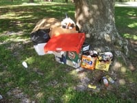 Rubbish left by park visitors after a picnic in the Parklands