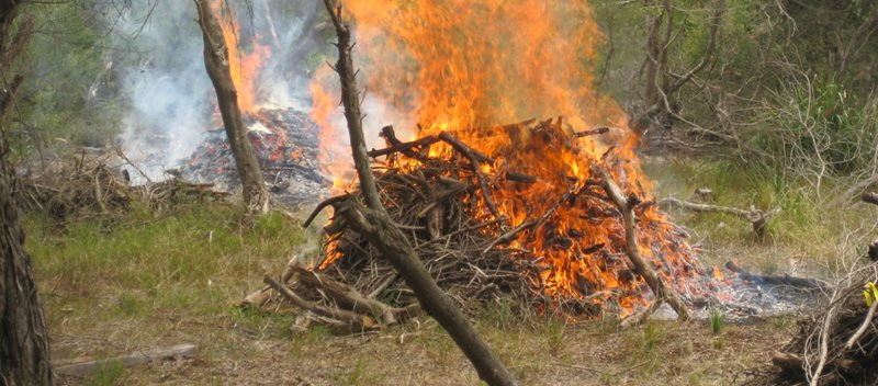 Ecological pile burn controlled by NSW Fire