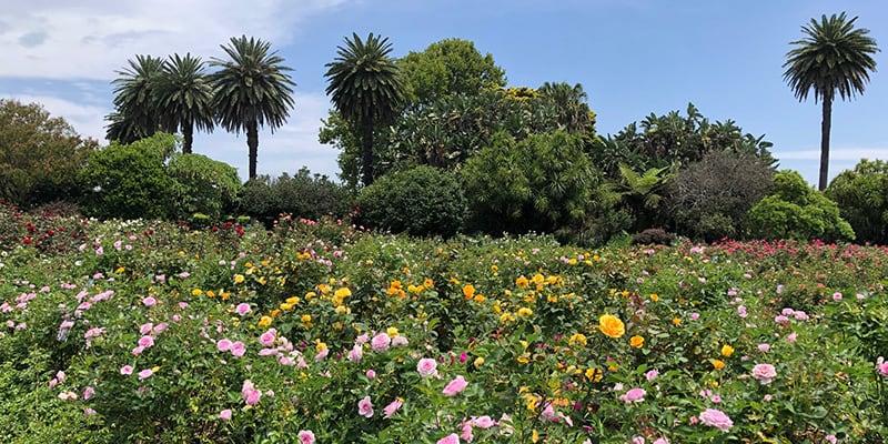 centennial park, horticulture, summer gardening, sydney