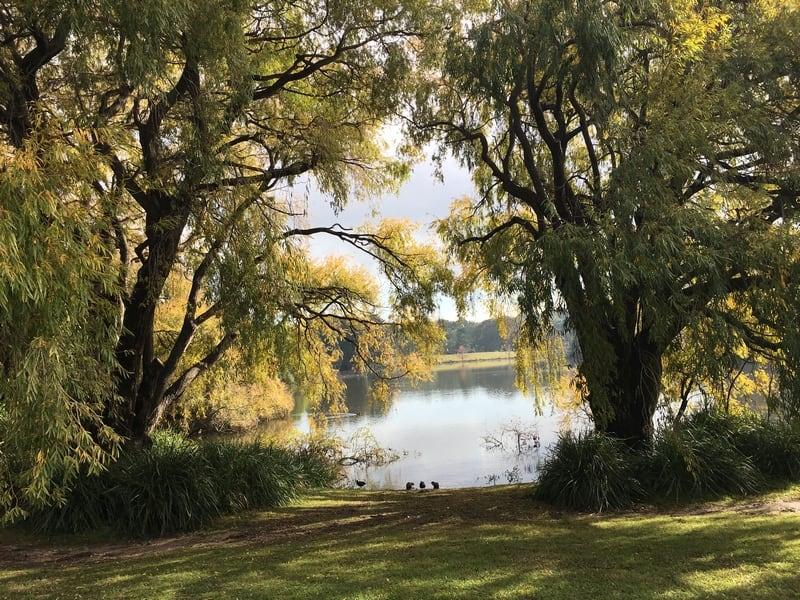 Weeping Willow, Centennial Park